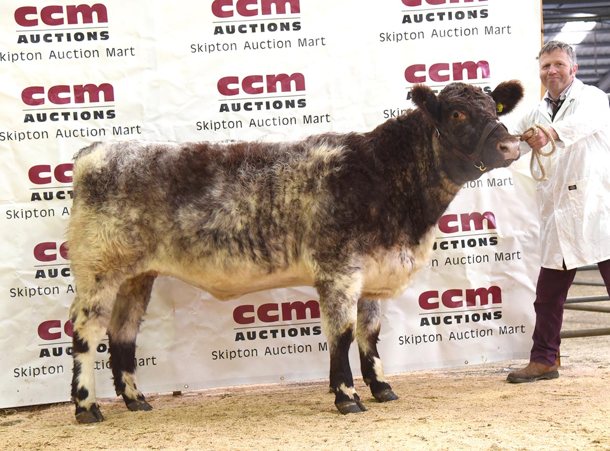 Sandwick Floss Jitterbug sold at the Skipton BSH sale for 5000gns